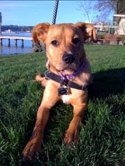 Picture of Zoey, Therapy Dog at EW Myofascial Therapies.